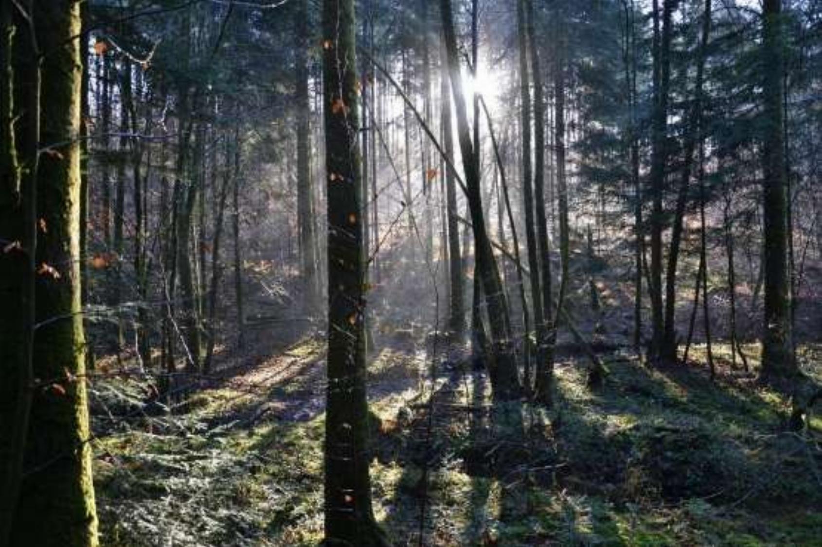 Zomer bezinningsweek-terug naar (je) natuur