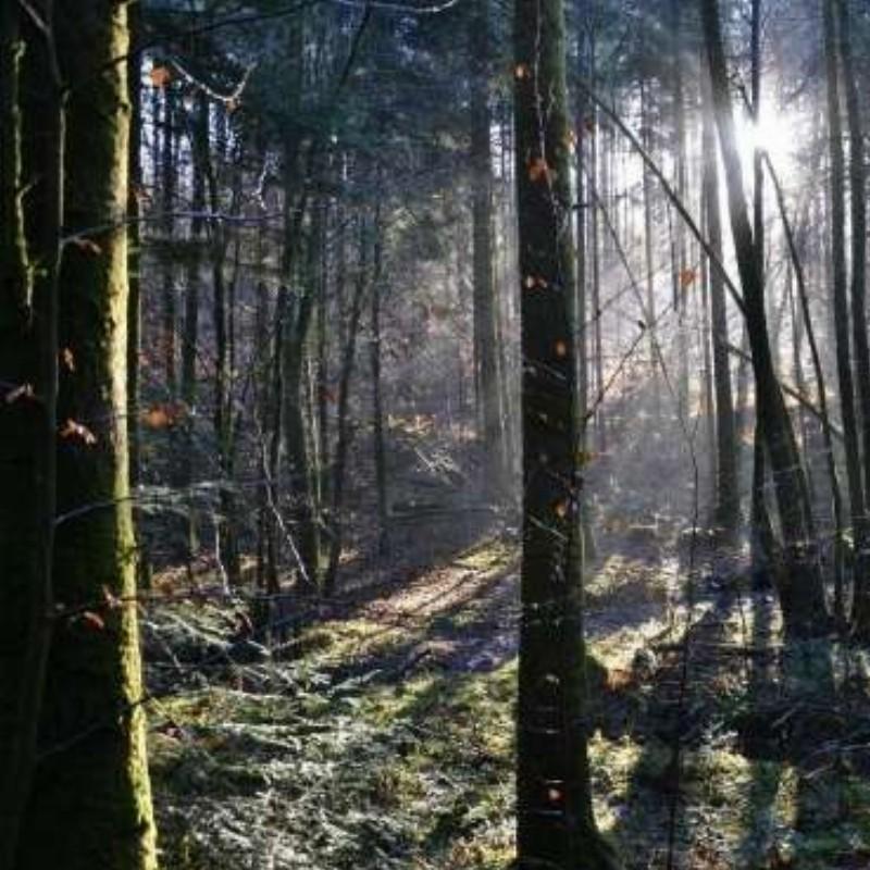 De weg van de heldin-Autobiografisch schrijfcursus- online   Zutphen