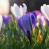 Ademwerk & Rituelen: Oostenwind, lente een nieuw begin door