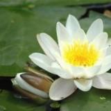 Het Land van je Ziel, cursus zang en meditatie, start maandelijks: 13 sept., tweewekelijks 17 okt. door