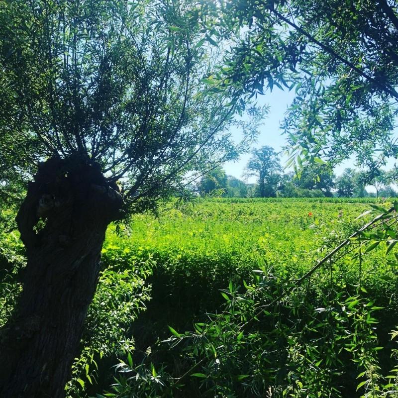 Wandelen door de seizoenen; Herfst; loslaten   Amersfoort, Den Treek