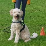 Begeleiding Angst voor Honden (groepstraining) door