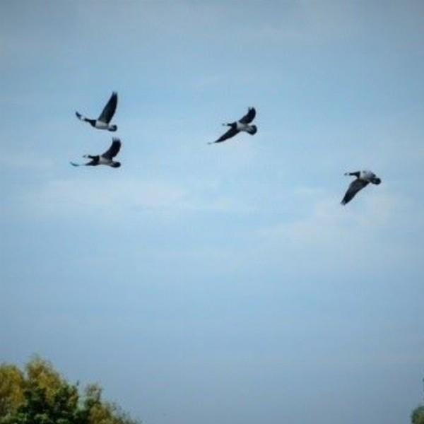 Vroege Vogels | Sassenheim