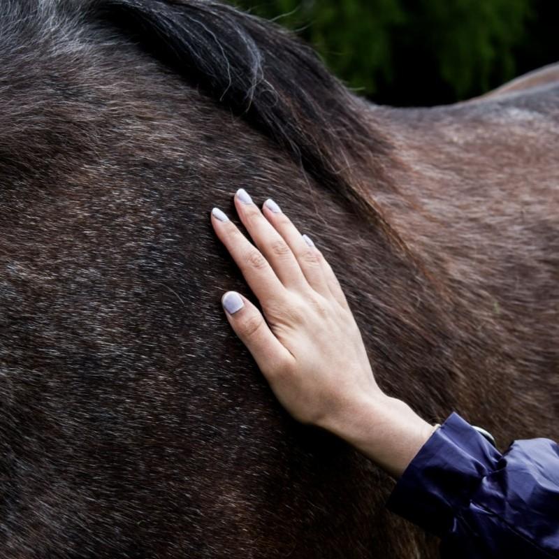 Zelf-Gezondheid | Systemische kijk op gezondheid met behulp van paarden | Lisserbroek