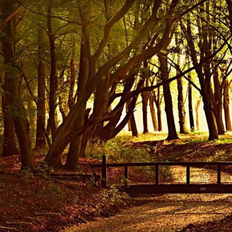 Wandelend je hart luchten!   Voorhout
