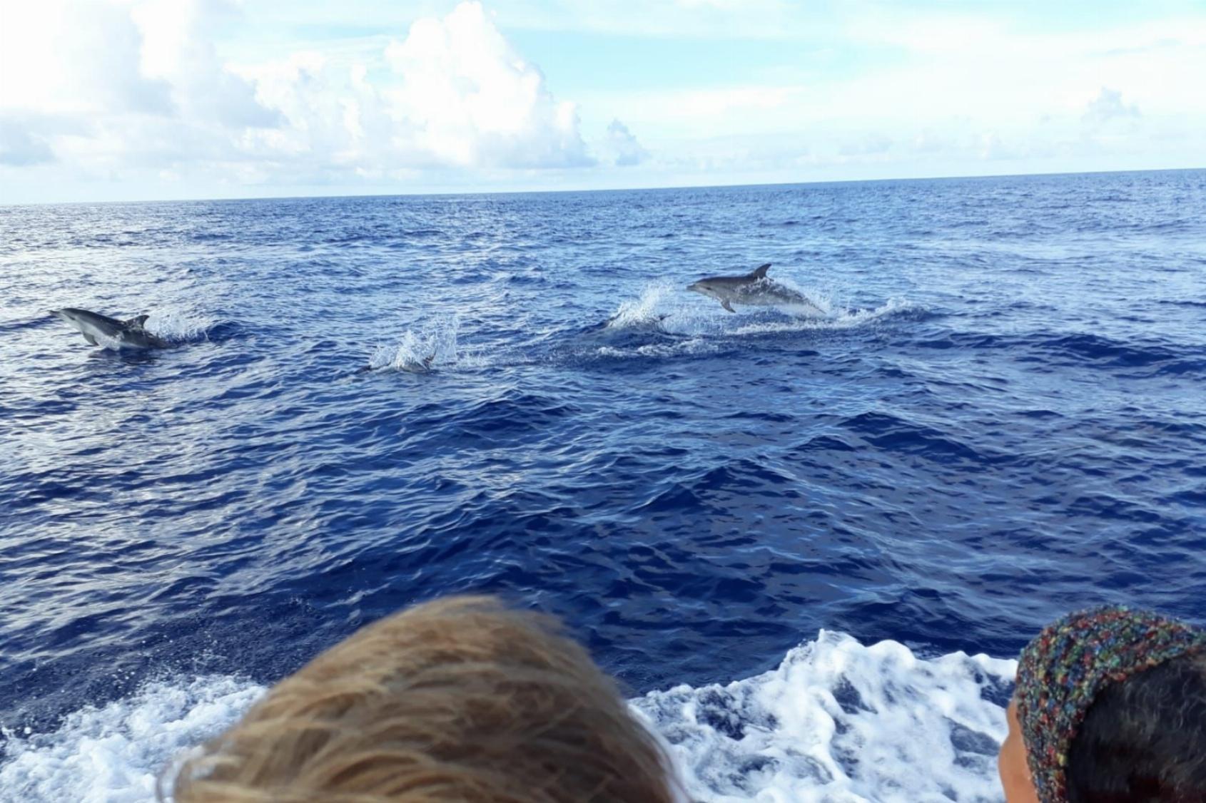 Dolfijnen – Mensen – Walvissen in verbinding en in jezelf