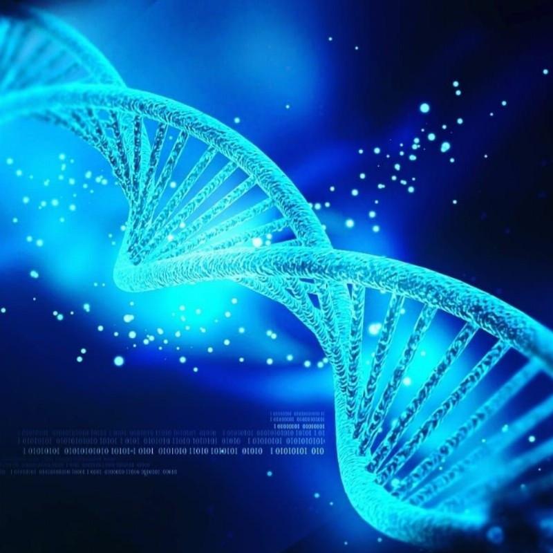 DNA zelf-healing | Culemborg