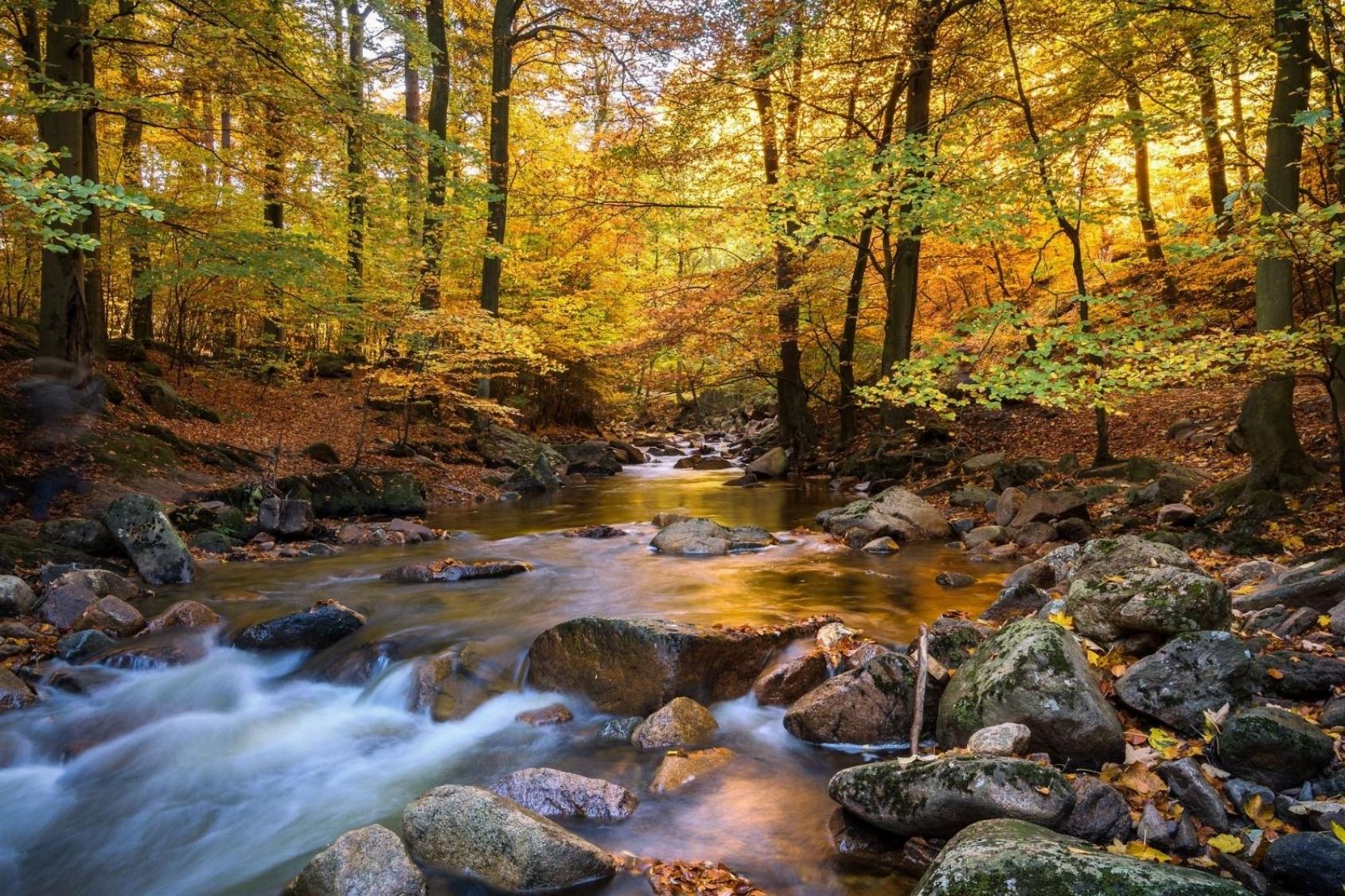 Lunchwandeling - Loslaten (het herfstbos als spiegel) - Delftse Hout - EXTRA WANDELING