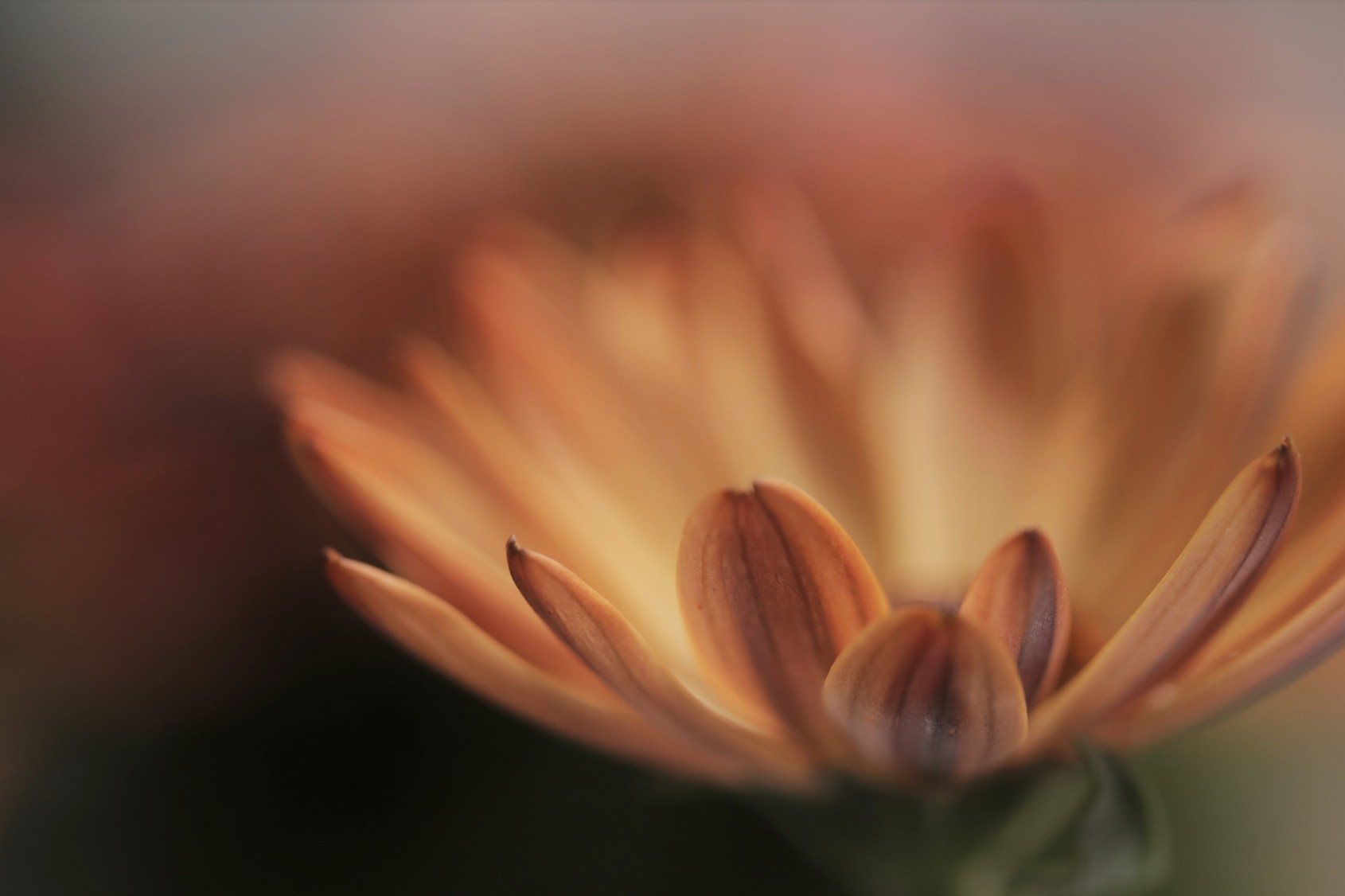 Zelfcompassie (Kristin Neff) - Vermilder de wereld, begin bij jezelf!