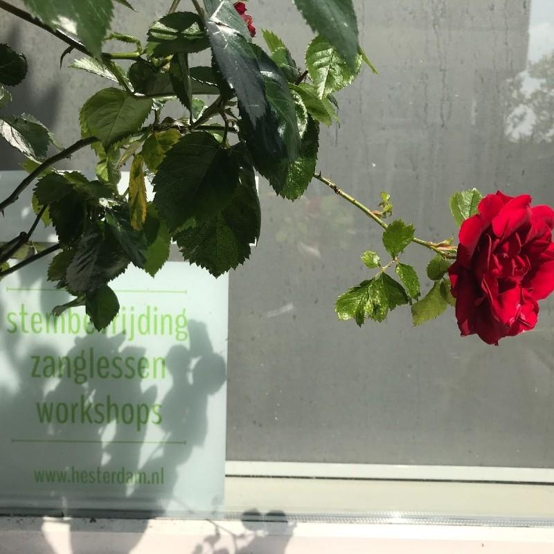 Mantra avond: zing vanuit je hart!   Delft