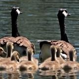 Ochtend Familieopstellingen