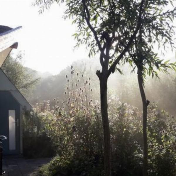 Culinary Wild Edible Plant Walk | Den Haag