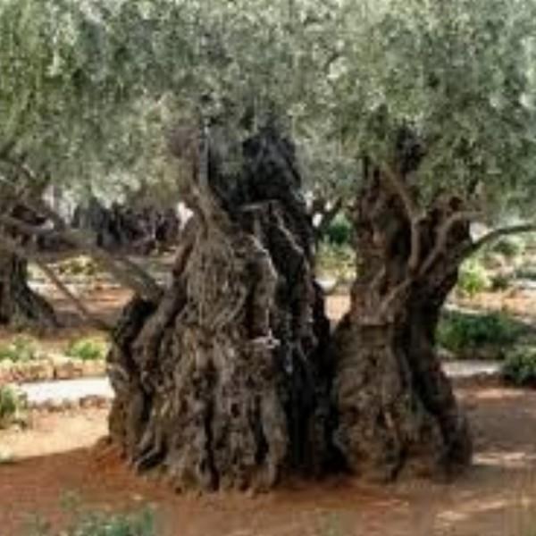 Over water en Wijn: spirituele rondreis Israel. | Tiberias, Jerusalem, Jericho en Nazareth.