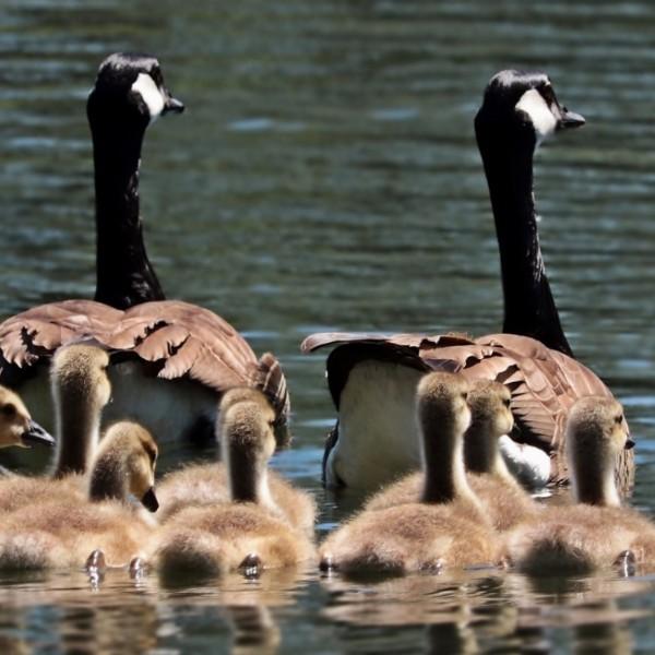 Ochtend Familieopstellingen | Leidschendam