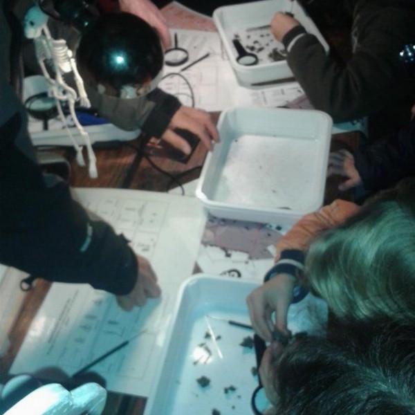 Kinderactiviteit bij de Ulebelt: braakballen pluizen | Deventer