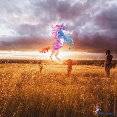 SDM horses | Paardencoaching Gelderland