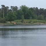 Weekend Familie Opstellingen in Natuurgebied de Kampina