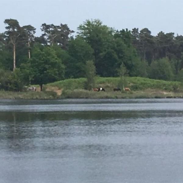 Modita van Zummeren-Oisterwijk