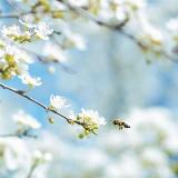 Zomerweek Mindfulness en Compassie (4 of 5 dagen)
