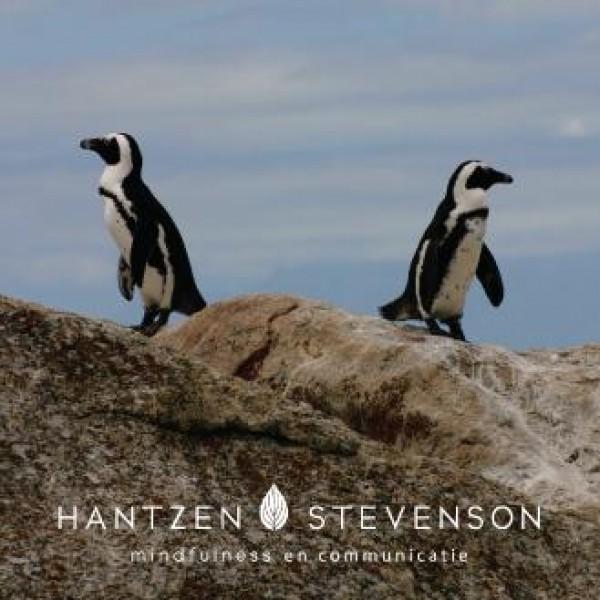 Hantzen Stevenson-Haren