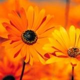 Start Avondcursus Zelf-Liefde, zelf-acceptatie en zelf-vertrouwen (reeks van 6 avonden) door