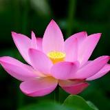 Meditatie avond gebaseerd op de Soefi Boodschap van Inayat Khan