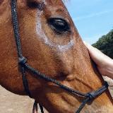 Workshop Dit ben ik : Paardencoaching voor kinderen van 6 tot 12 jaar