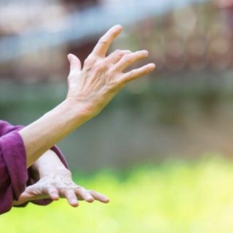 Buitenlessen Chi Neng Qigong - meditatie in beweging | Overveen
