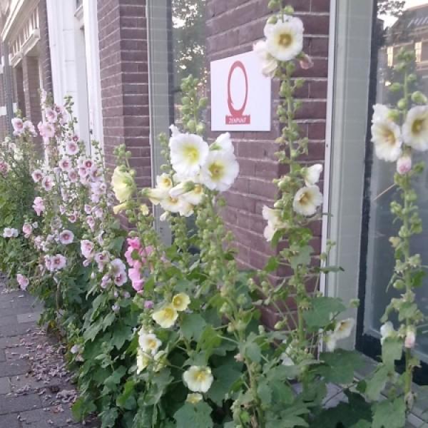 Daan de Bruijn-Haarlem