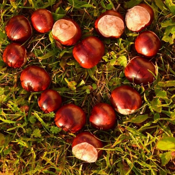 Vier de herfst bosbad-wandeling | Vogelenzang