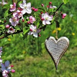 Volg je hart retraite dag-Lente editie