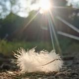Workshop de kracht van de juiste voedingsleer door Paula Holtzer