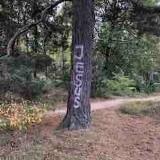 Online wereldwijde meditatie