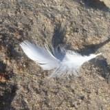 Cursus: ontmoeting met je engel