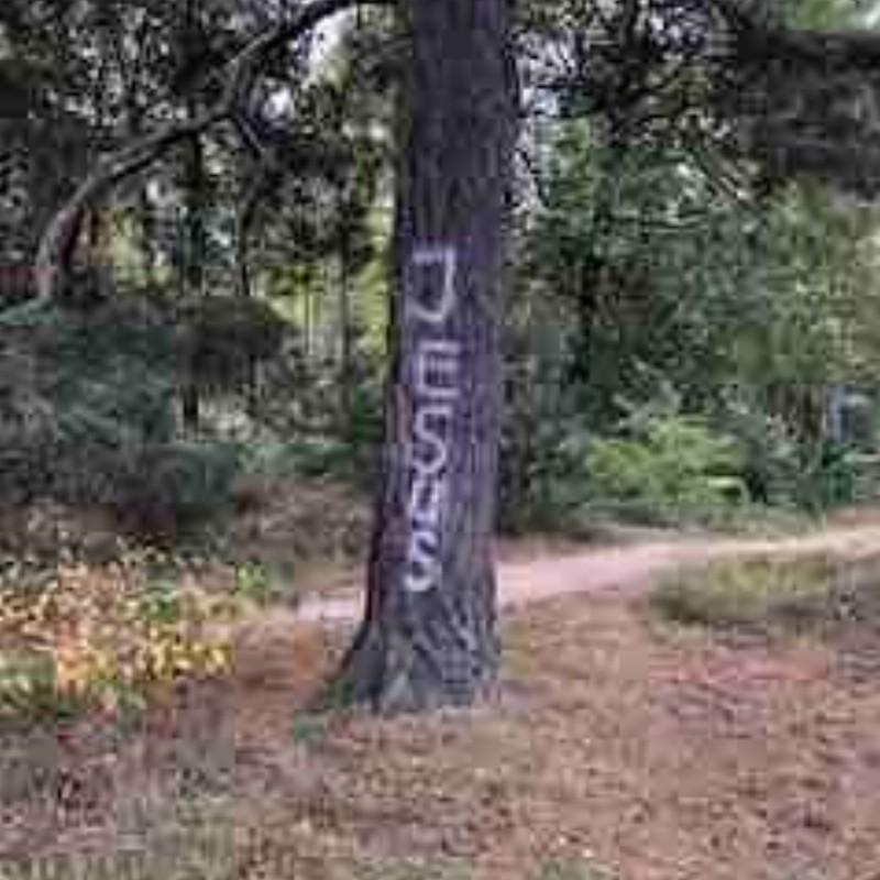 Online wereldwijde meditatie, gratis | Zoom