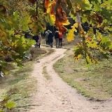 Inspiratie wandeling / Bosbad | Westland